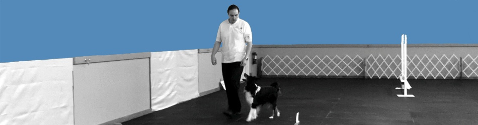 Jake Hollingsworth certified positive dog trainer clicker training raleigh